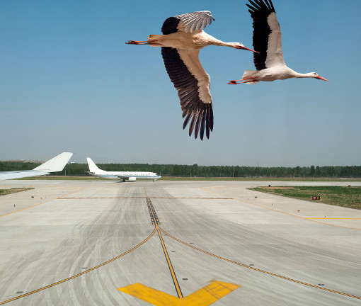 Storks at an airport